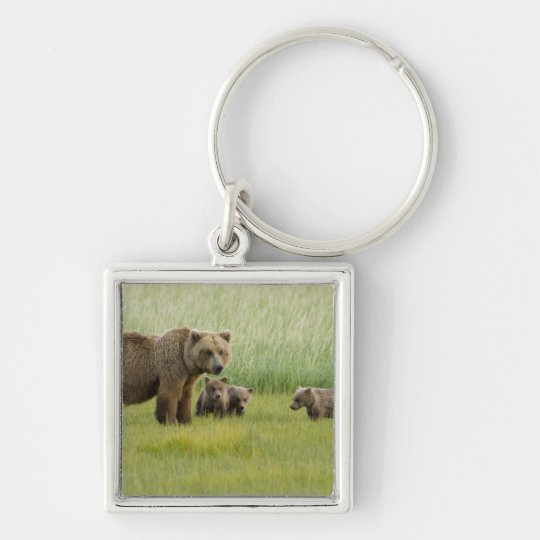 Alaskan Brown Bear Sow and three Cubs, Ursus Keychain