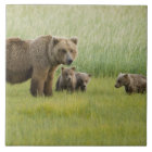 Alaskan Brown Bear Sow and three Cubs, Ursus Tile