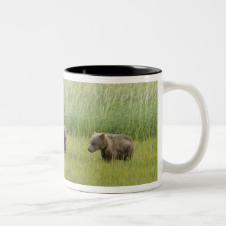 Alaskan Brown Bear Sow and three Cubs, Ursus Two-Tone Coffee Mug