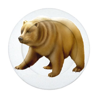 Alaskan Brown Grizzly Bear Button Covers