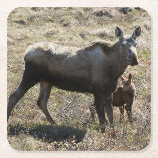 Alaskan Cow Moose with Calf Square Paper Coaster