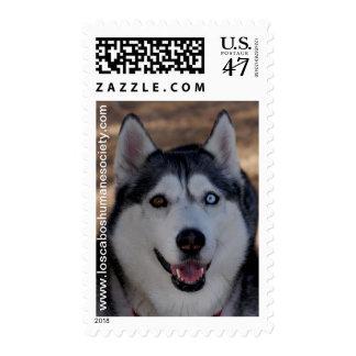 Alaskan Dog Postage