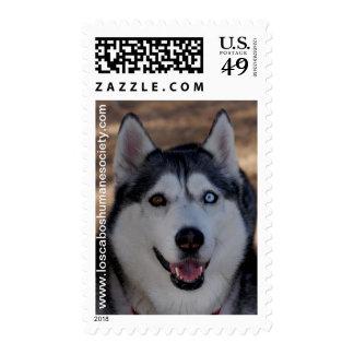 Alaskan Dog Postage Stamp