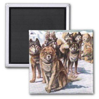 Alaskan Eskimo Dogs 2 Inch Square Magnet