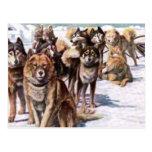 Alaskan Eskimo Dogs Postcard