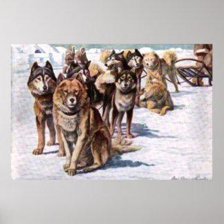 Alaskan Eskimo Dogs Poster