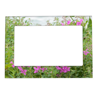 Alaskan Fireweed Magnetic Picture Frame