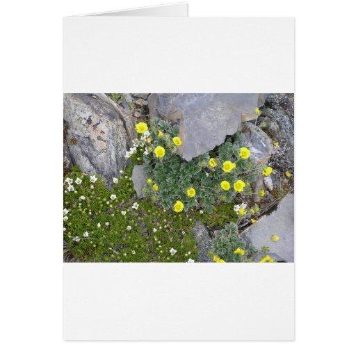 Alaskan Flowers in Denali National Park Card