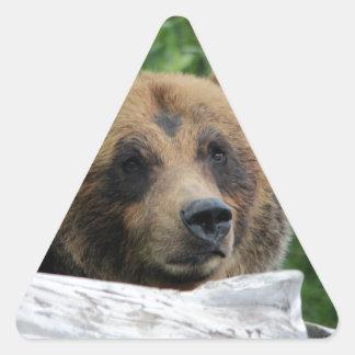 Alaskan Grizzly Bear, The Kodiak Triangle Sticker