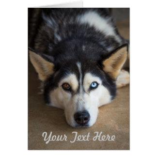 Alaskan Huskey Greeting Card