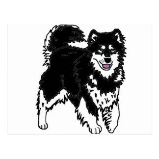 Alaskan Husky dog Postcard
