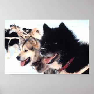 Alaskan Husky Love Poster