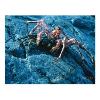 Alaskan King Crab Postcard