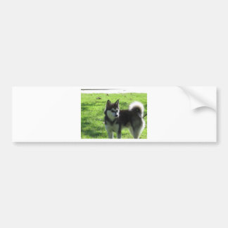 Alaskan Klee Kai Dog Bumper Sticker