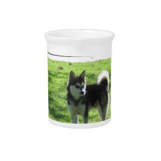 Alaskan Klee Kai Dog Drink Pitcher