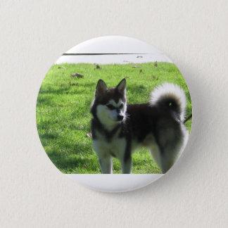 Alaskan Klee Kai Dog Pinback Button