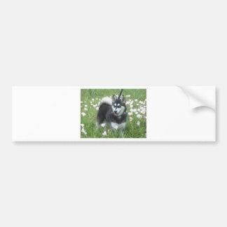 Alaskan Klee Kai Dog Plays In The Tulips Bumper Sticker