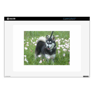 Alaskan Klee Kai Dog Plays In The Tulips Laptop Decal