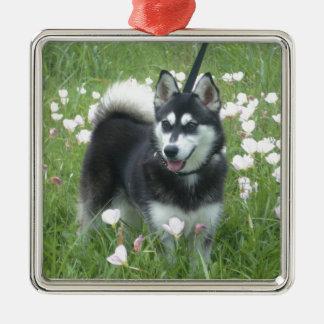 Alaskan Klee Kai Dog Plays In The Tulips Metal Ornament