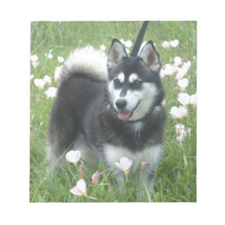 Alaskan Klee Kai Dog Plays In The Tulips Notepad
