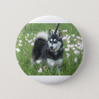 Alaskan Klee Kai Dog Plays In The Tulips Pinback Button