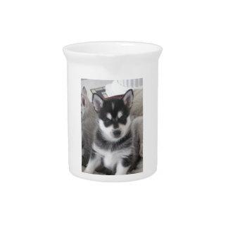 Alaskan Klee Kai Puppy Dog Beverage Pitcher