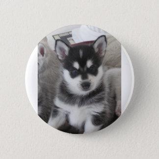 Alaskan Klee Kai Puppy Dog Pinback Button