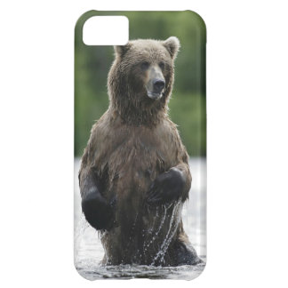 Alaskan Kodiak Brown Bear iPhone 5C Cover