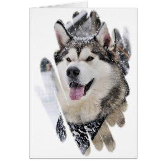 Alaskan Malamute Blank Greeting Card *SFF