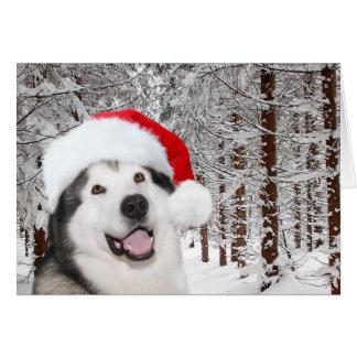 Alaskan Malamute Christmas Card