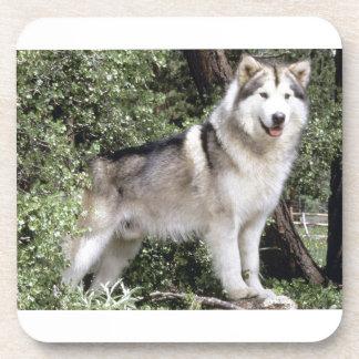 Alaskan Malamute Dog Drink Coaster