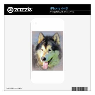 Alaskan Malamute Dog iPhone 4S Decals