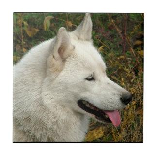 Alaskan Malamute Dog Photograph Ceramic Tile