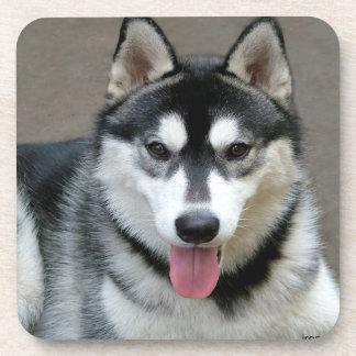 Alaskan Malamute Dog Photograph Coaster