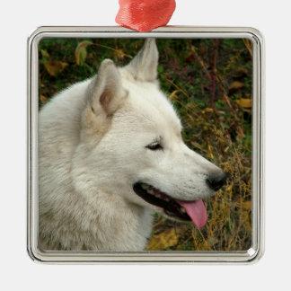 Alaskan Malamute Dog Photograph Metal Ornament