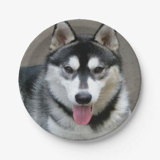 Alaskan Malamute Dog Photograph Paper Plate