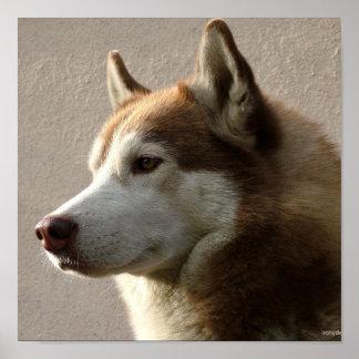 Alaskan Malamute Dog Photograph Print