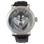Alaskan Malamute Dog Photograph Wristwatch