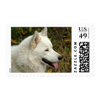 Alaskan Malamute Dogs Postage Stamp