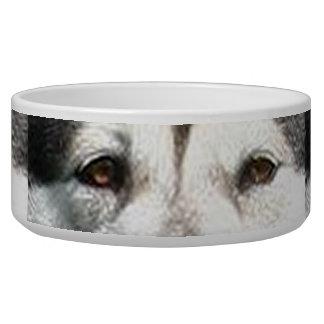alaskan malamute eyes.png bowl