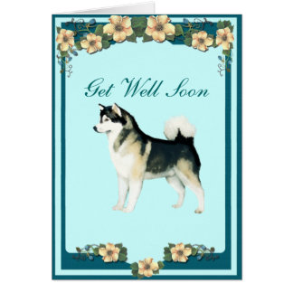 Alaskan Malamute Get Well Greeting Card