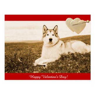 Alaskan Malamute Happy Valentine's Day postcard
