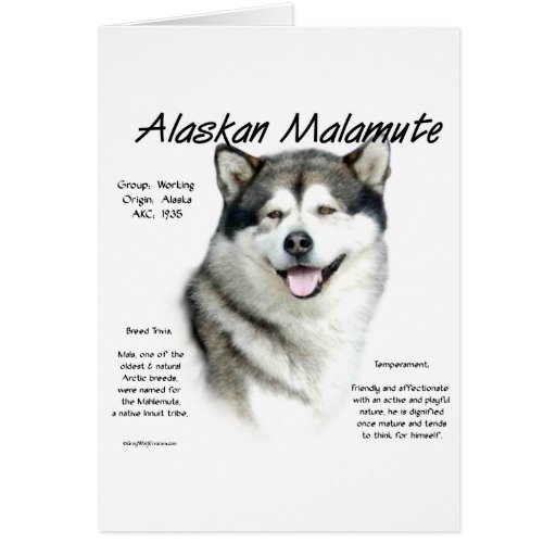 Alaskan Malamute History Design Cards