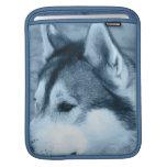 Alaskan Malamute iPad Sleeve