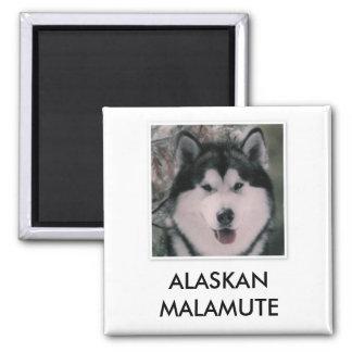 Alaskan Malamute Magnet