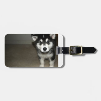 alaskan malamute pup 3.png tags for luggage