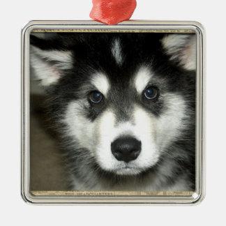 Alaskan Malamute Pup Metal Ornament