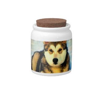 Alaskan Malamute Puppies Candy Jar