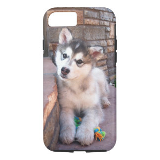 Alaskan Malamute Puppy Head Tilt Photograph iPhone 8/7 Case