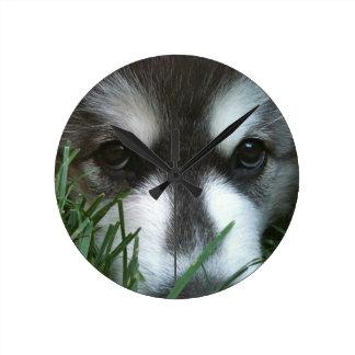 Alaskan Malamute Puppy Round Clock